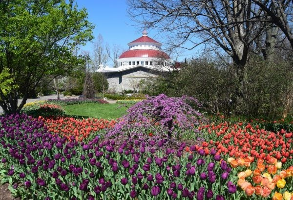 Cincinnati Zoo Dazzles with Spring Blooms