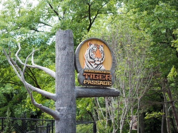 A Taste of Siberia at Cleveland Zoo's Tiger Passage