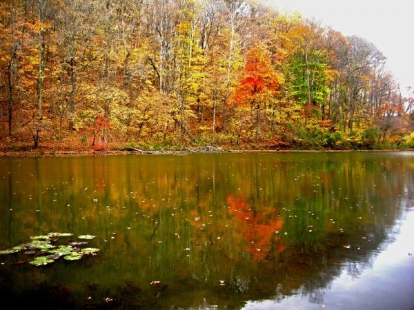 Escape to Burr Oak State Park