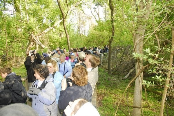 The Biggest Week in American Birding comes to Ohio