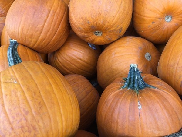 Picking the Perfect Pumpkin