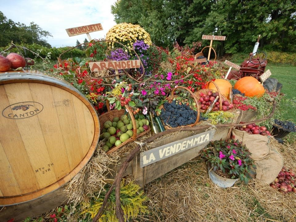 Celebrate Harvest at Ohio's Wineries