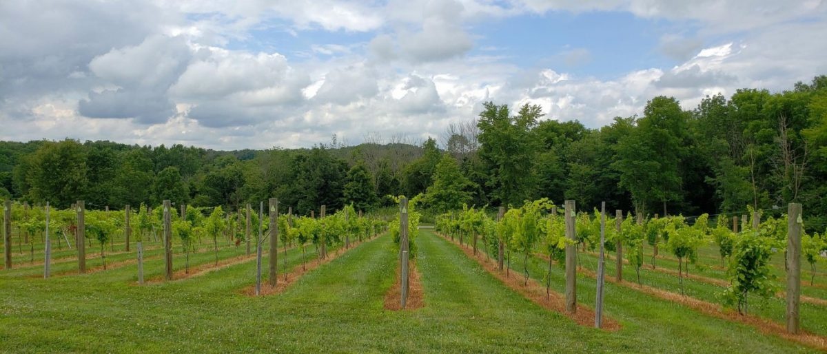 The Licking County Wine Trail