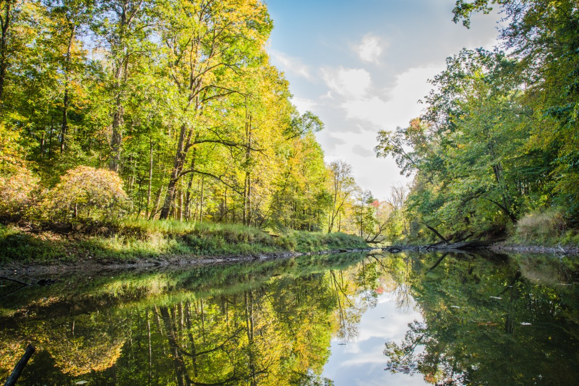 The Nature Conservancy's Morgan Swamp Preserve