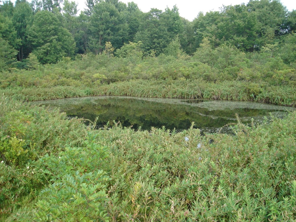 The Nature Conservancy's Brown's Lake Bog Preserve