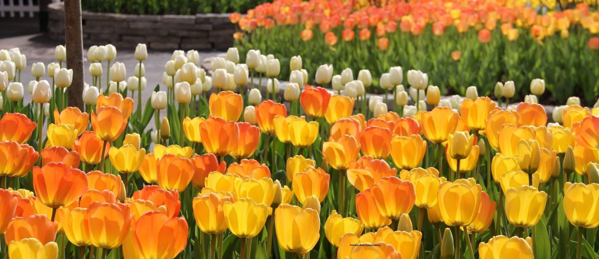 Ohio in Bloom: Where to See Spring Flowers