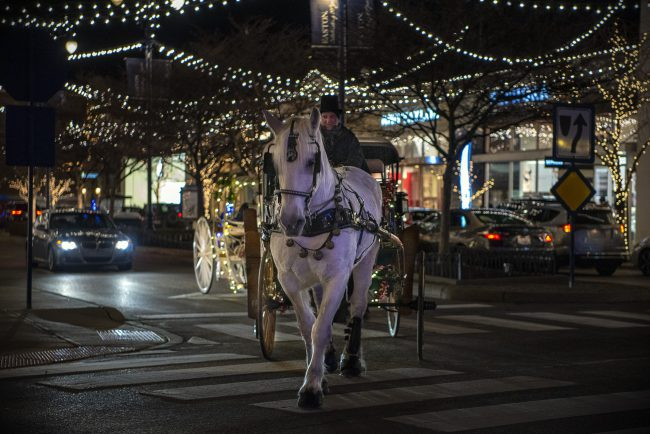 Magnificent Carriage and Sleigh Rides in Ohio