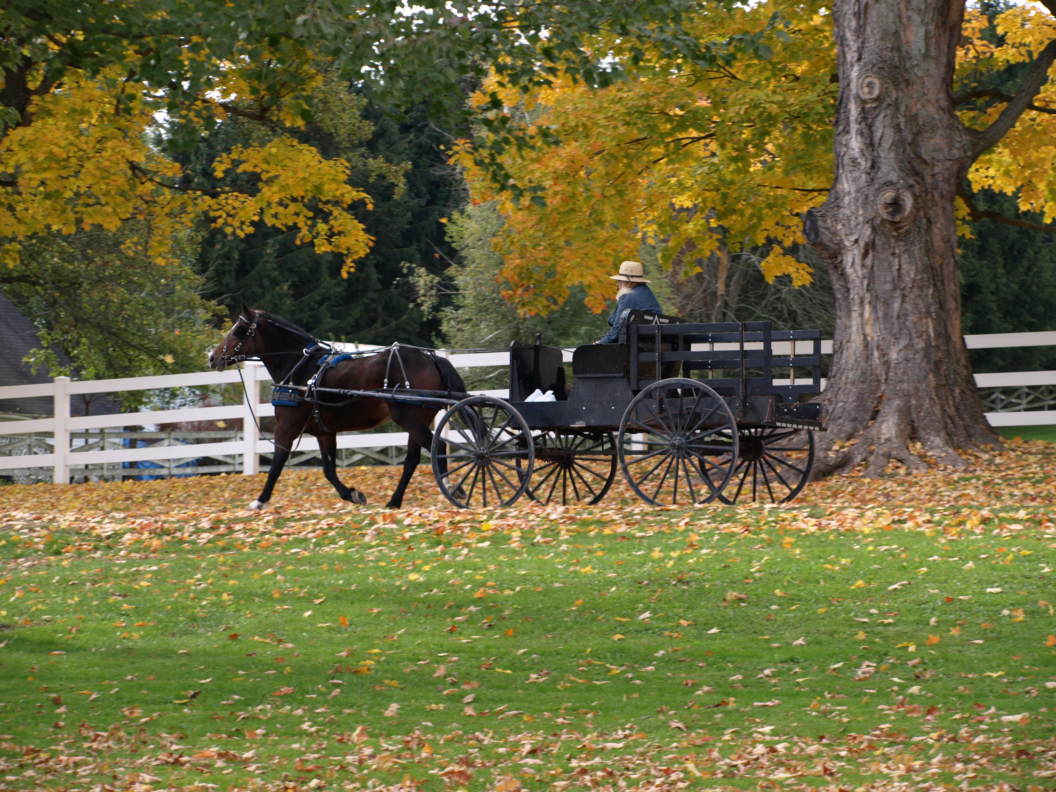 Explore Ohio's Amish Country
