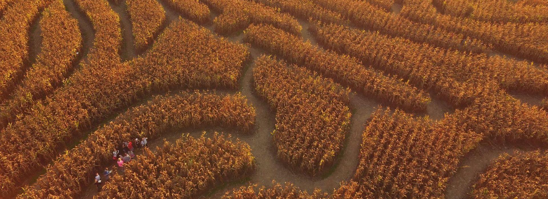 Top Five Ohio Corn Mazes